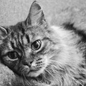 Purrfect pest control: The end of an era