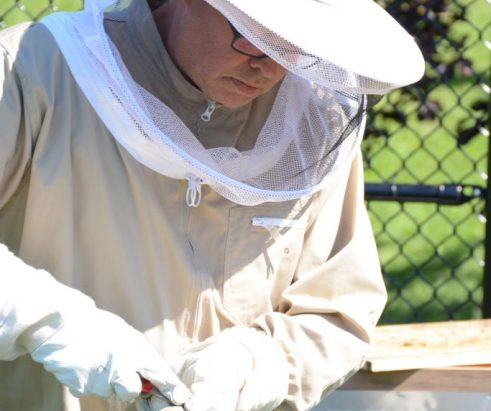 Bee hives make campus debut