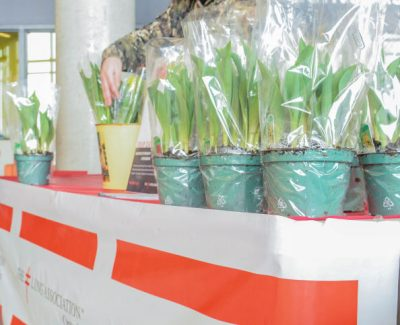 Tulip Day comes to Algonquin