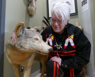 Wolfie: The unmoving protector of the Mamidosewin Centre