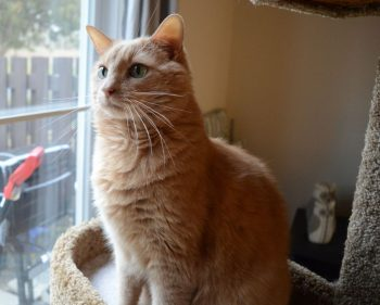 Algonquin prof fights cat declawing laws with petition