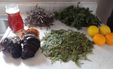 Chaga, Tamarack, Spruce stems, Cedar lemon, and Oranges. Ingredients one community member chose to create their medicine (mushkiki) tea. Photo Credit: Juanita Dumont