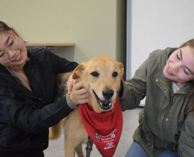 Therapy dogs to reduce stress